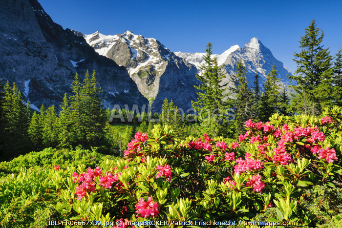 awl-images.com - Switzerland / Eiger and M�nch, view Chalberboden, Bern, Switzerland, Europe