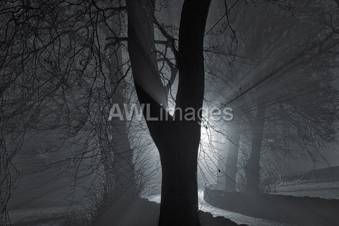 awl-images.com - England / England, West Yorkshire, Calderdale. Light rays and trees on a foggy night.