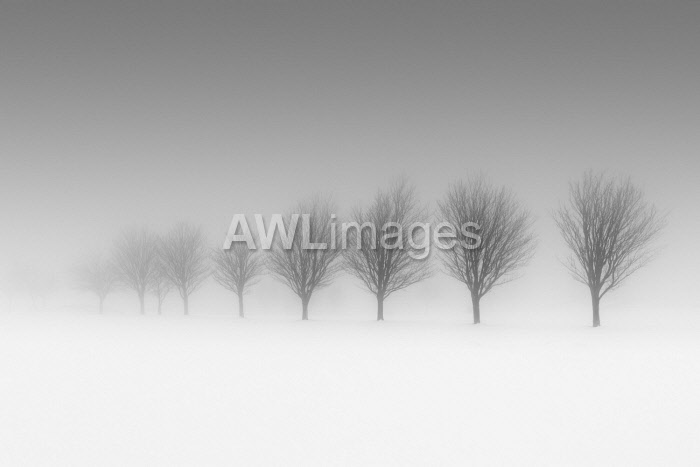 awl-images.com - England / England, West Yorkshire, Calderdale. A row of trees disappearing into freezing fog.