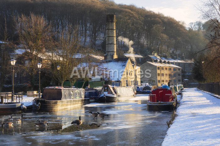 awl-images.com - England / England, West Yorkshire, Hebden Bridge. Geese on the frozen canal.