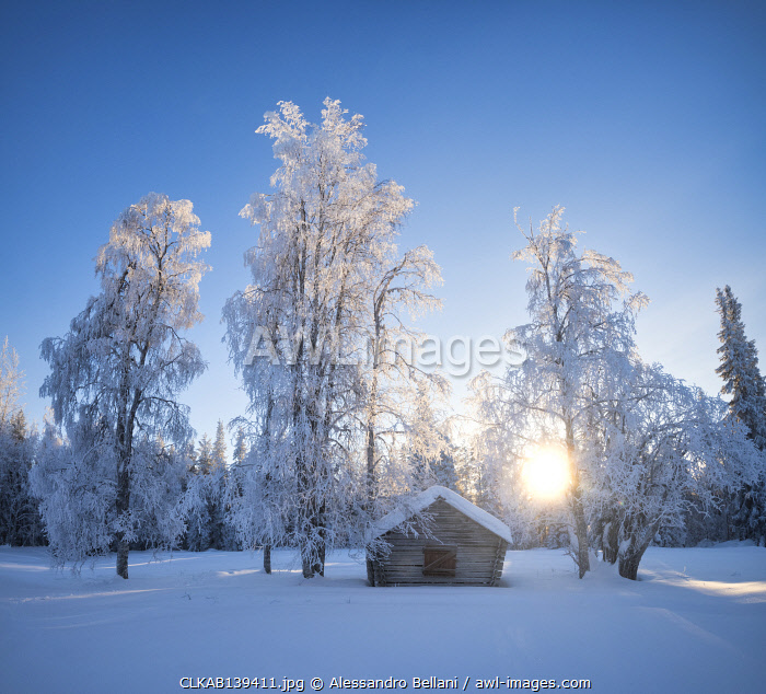 awl-images.com - Sweden / Rays of light from the snowy forest, Norrbotten County, Lapland, Sweden, Europe