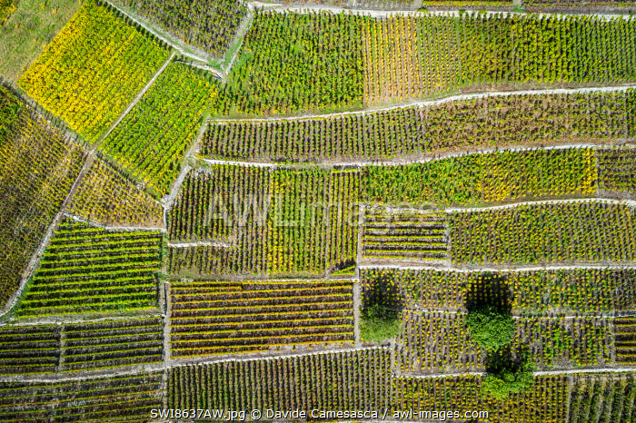 awl-images.com - Switzerland / Switzerland, Canton of Valais, Fully, Vineyards on the hills of Fully.